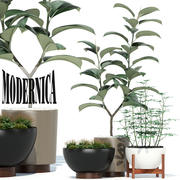 Plants collection 73 Modernica pots 3d model