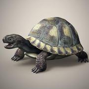 Черепаха 3d model
