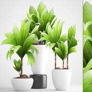 young coconut tree 3d model