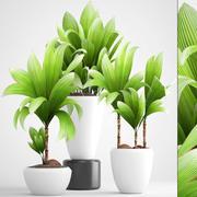 młode drzewo kokosowe 3d model