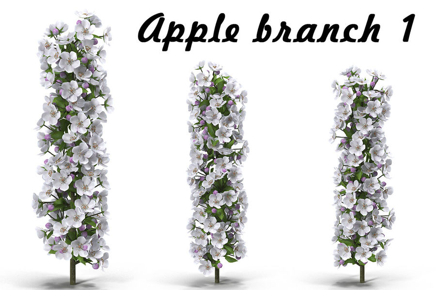 Apple branch 1 royalty-free 3d model - Preview no. 1