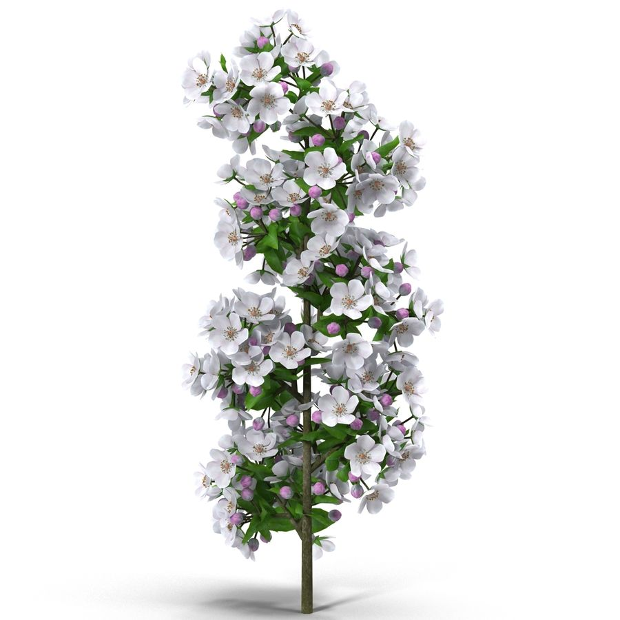 Apple branch royalty-free 3d model - Preview no. 7
