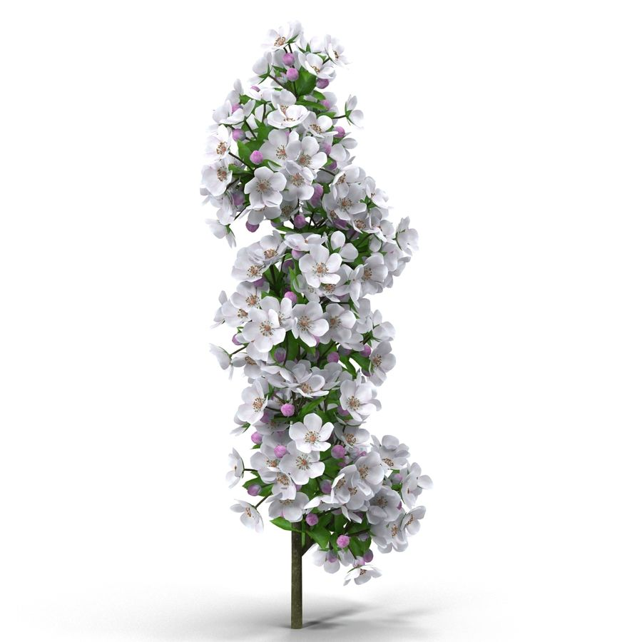 Apple branch royalty-free 3d model - Preview no. 8