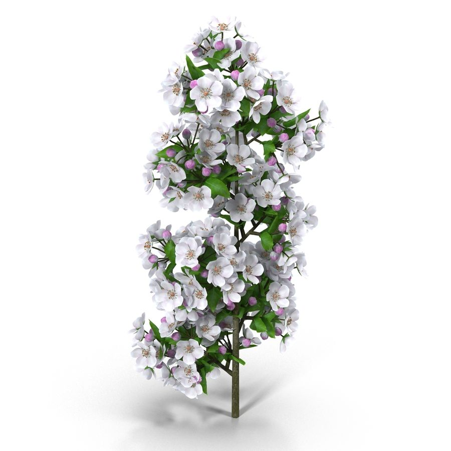 Apple branch royalty-free 3d model - Preview no. 4