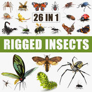 Insects Big Rigged 3D Models Collection 3d model