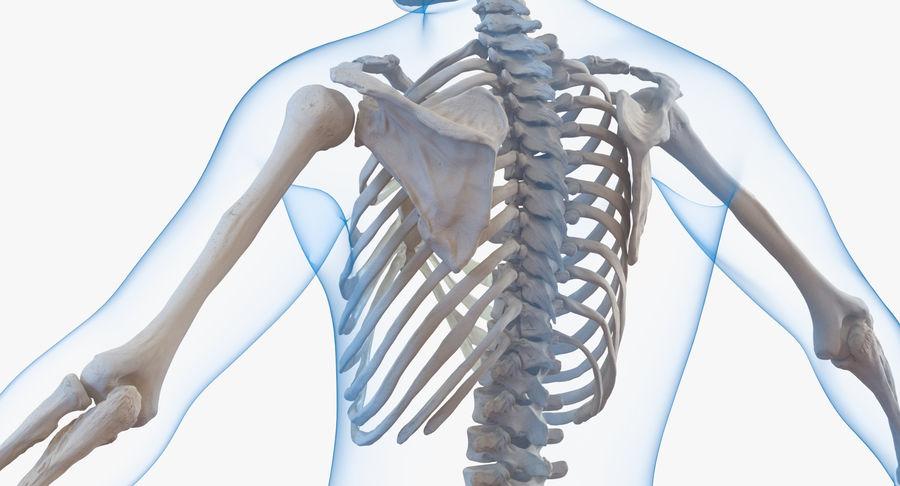 Męskie ciało ze szkieletem royalty-free 3d model - Preview no. 9
