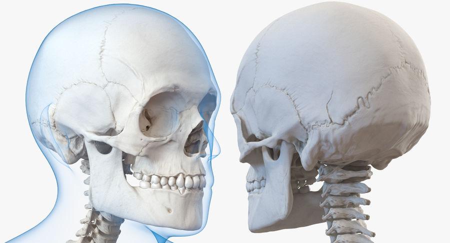 Męskie ciało ze szkieletem royalty-free 3d model - Preview no. 10