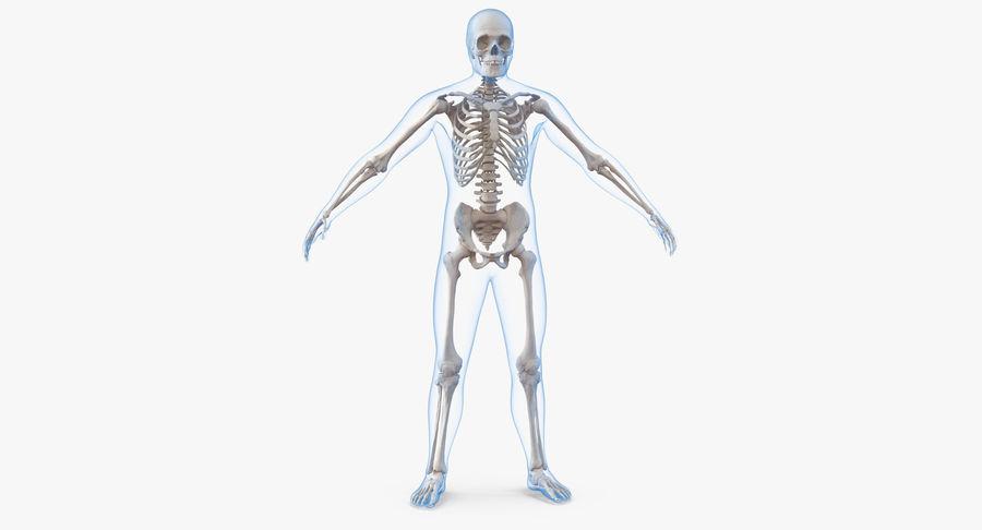 Męskie ciało ze szkieletem royalty-free 3d model - Preview no. 2