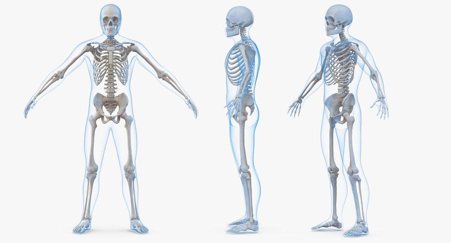 Męskie ciało ze szkieletem royalty-free 3d model - Preview no. 3