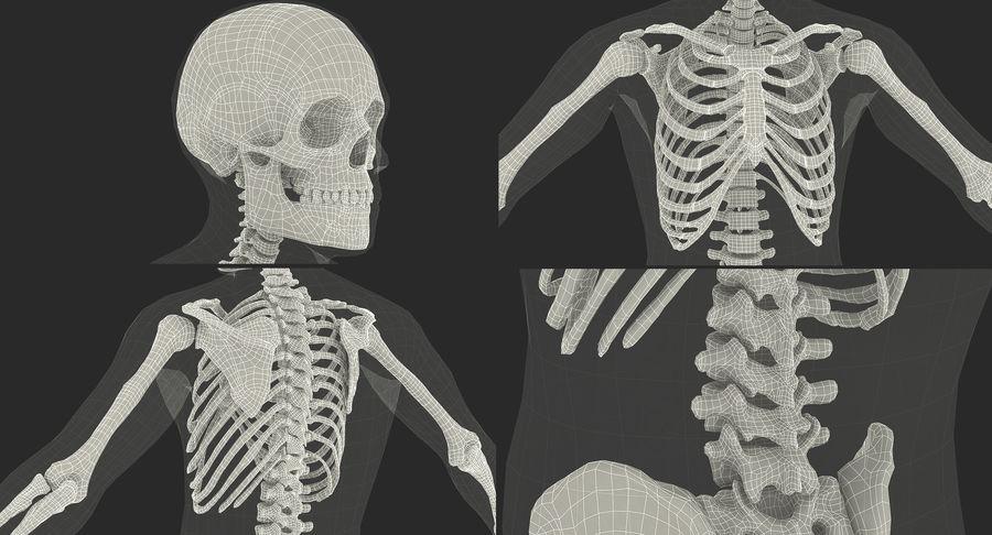 Męskie ciało ze szkieletem royalty-free 3d model - Preview no. 21