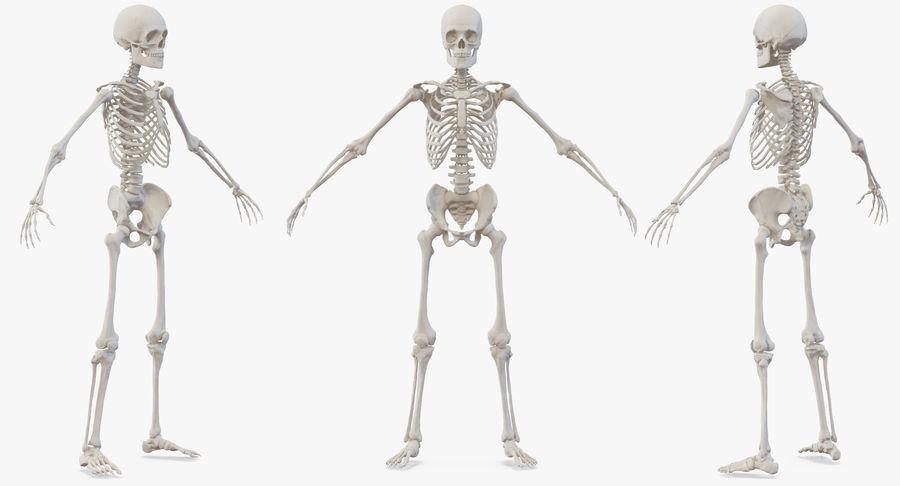 Męskie ciało ze szkieletem royalty-free 3d model - Preview no. 5