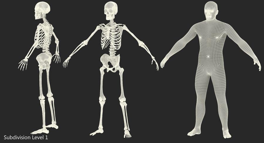 Męskie ciało ze szkieletem royalty-free 3d model - Preview no. 15