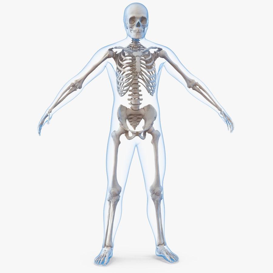 Męskie ciało ze szkieletem royalty-free 3d model - Preview no. 1