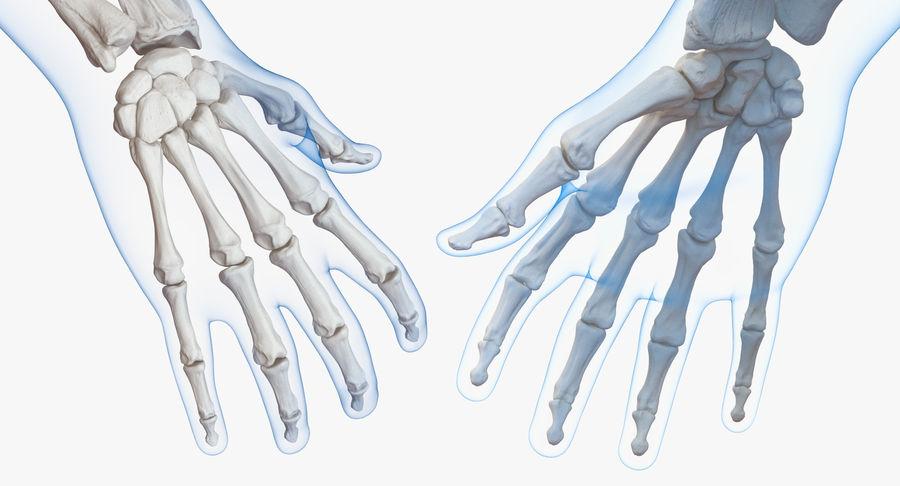 Męskie ciało ze szkieletem royalty-free 3d model - Preview no. 12