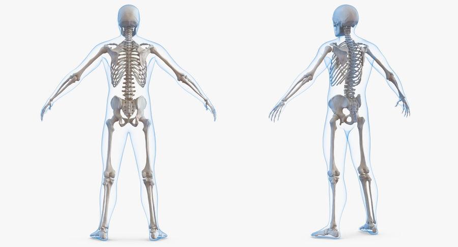 Męskie ciało ze szkieletem royalty-free 3d model - Preview no. 4
