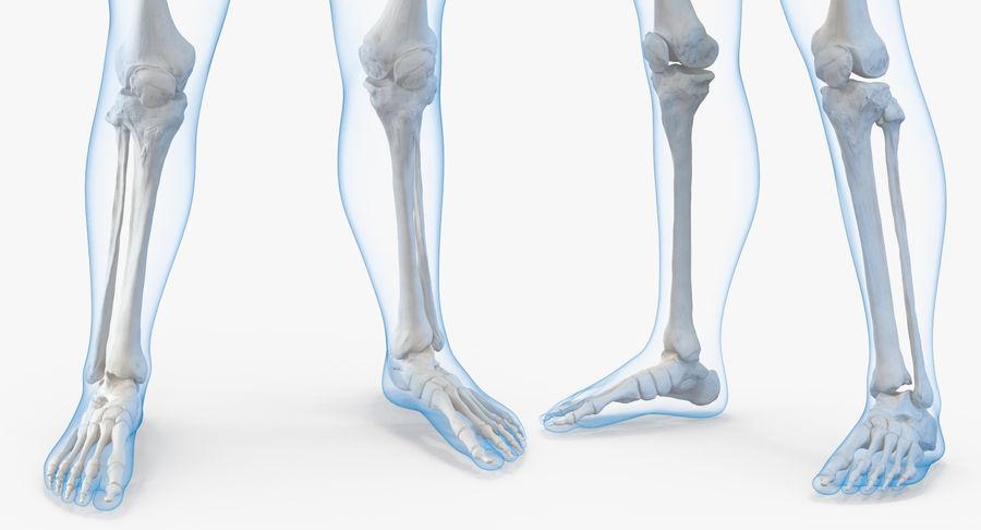 Męskie ciało ze szkieletem royalty-free 3d model - Preview no. 13