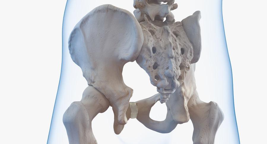 Męskie ciało ze szkieletem royalty-free 3d model - Preview no. 11