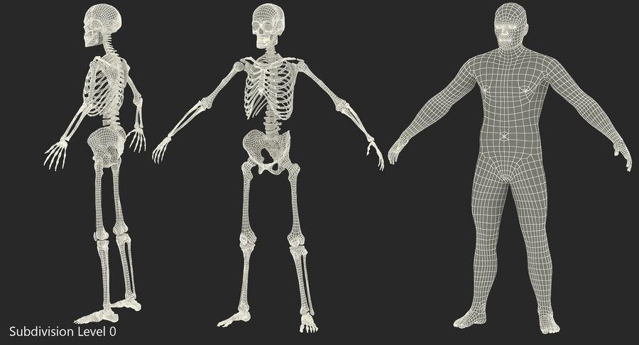 Męskie ciało ze szkieletem royalty-free 3d model - Preview no. 14