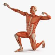 Sistema muscolare maschile nel modello 3D di posa del bodybuilder 3d model