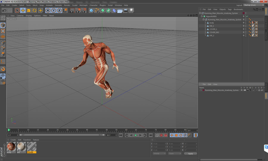 Running Man Muscles Anatomy System royalty-free 3d model - Preview no. 17
