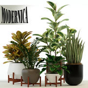 Plants collection 75 Modernica pots 3d model