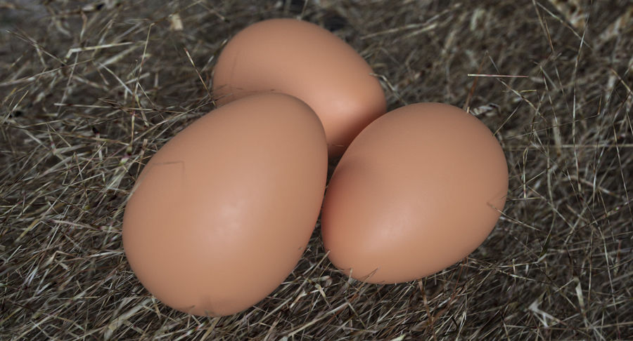 Brown Chicken Egg royalty-free 3d model - Preview no. 3