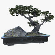 Árvore bonsai 3d model