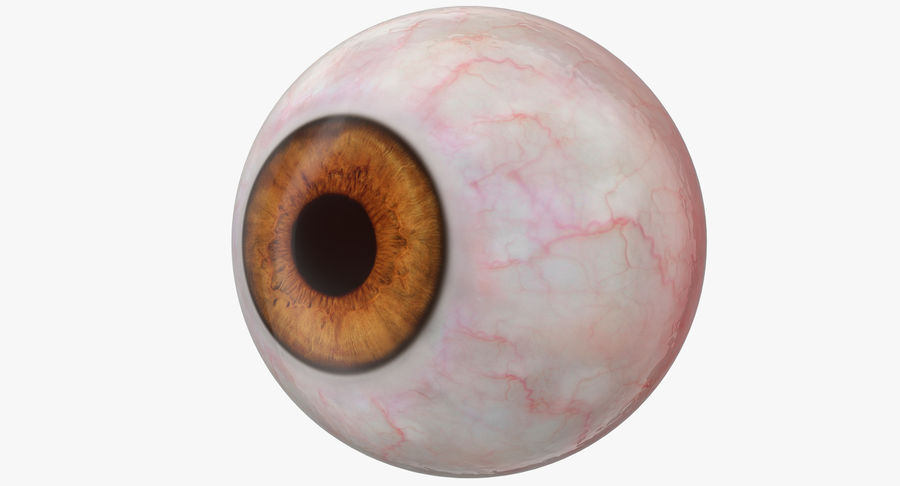 Human Eyeball royalty-free 3d model - Preview no. 2