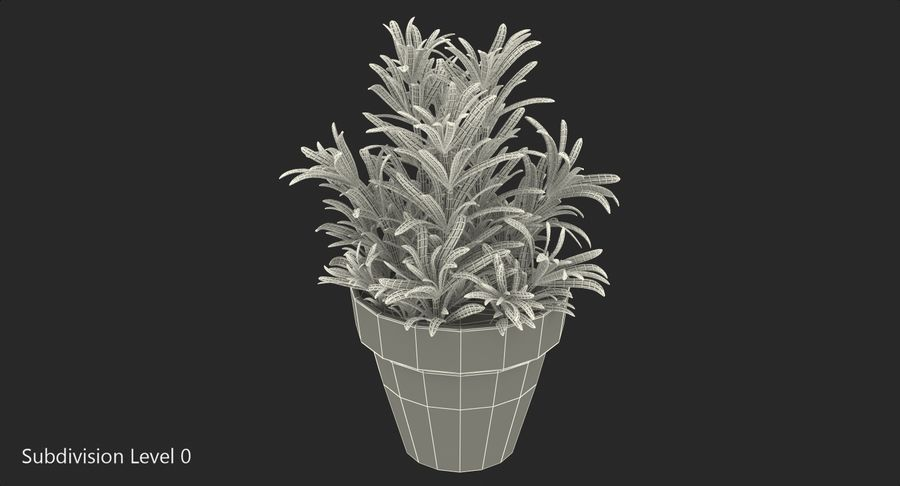 Rosemary Plant in Pot royalty-free 3d model - Preview no. 12