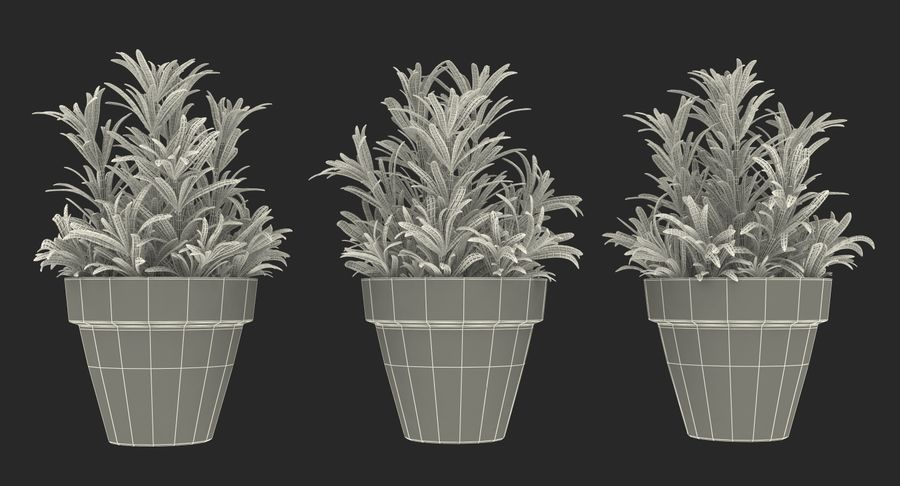 Rosemary Plant in Pot royalty-free 3d model - Preview no. 19