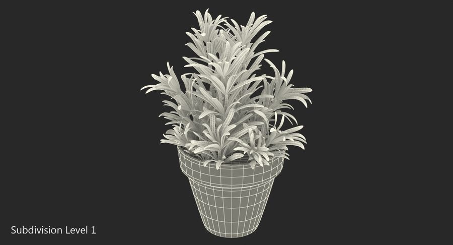 Rosemary Plant in Pot royalty-free 3d model - Preview no. 13