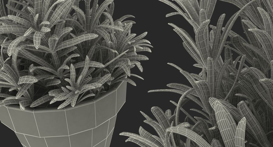 Rosemary Plant in Pot royalty-free 3d model - Preview no. 11