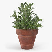 Rosemary Plant in Pot 3d model