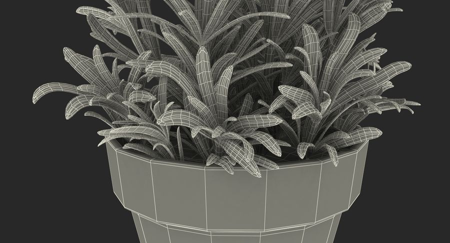 Rosemary Plant in Pot royalty-free 3d model - Preview no. 21