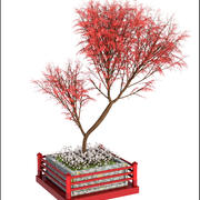 Drzewo azjatyckie 3d model