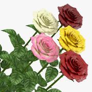 Роза открытая 3d model
