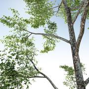 Baum für Archviz 3d model