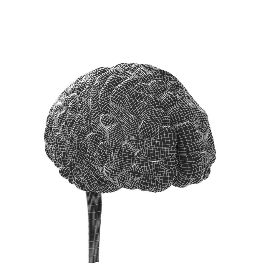 Anatomi Brain nervös hjärnsystem royalty-free 3d model - Preview no. 5