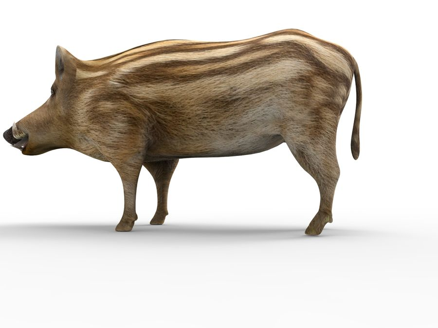 Cinghiale royalty-free 3d model - Preview no. 13