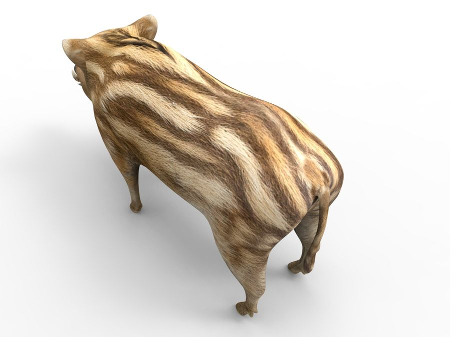 Cinghiale royalty-free 3d model - Preview no. 10