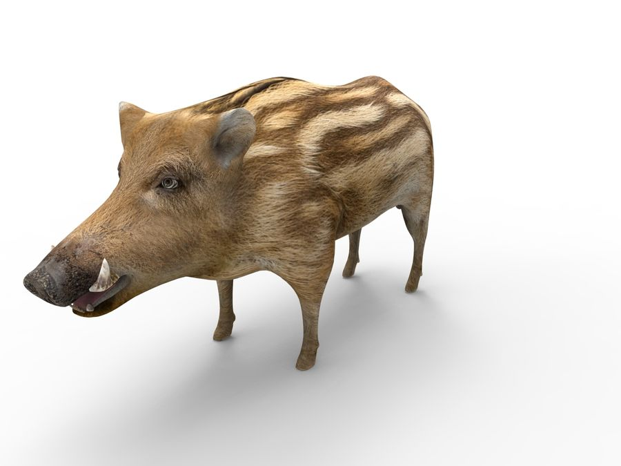 Cinghiale royalty-free 3d model - Preview no. 3