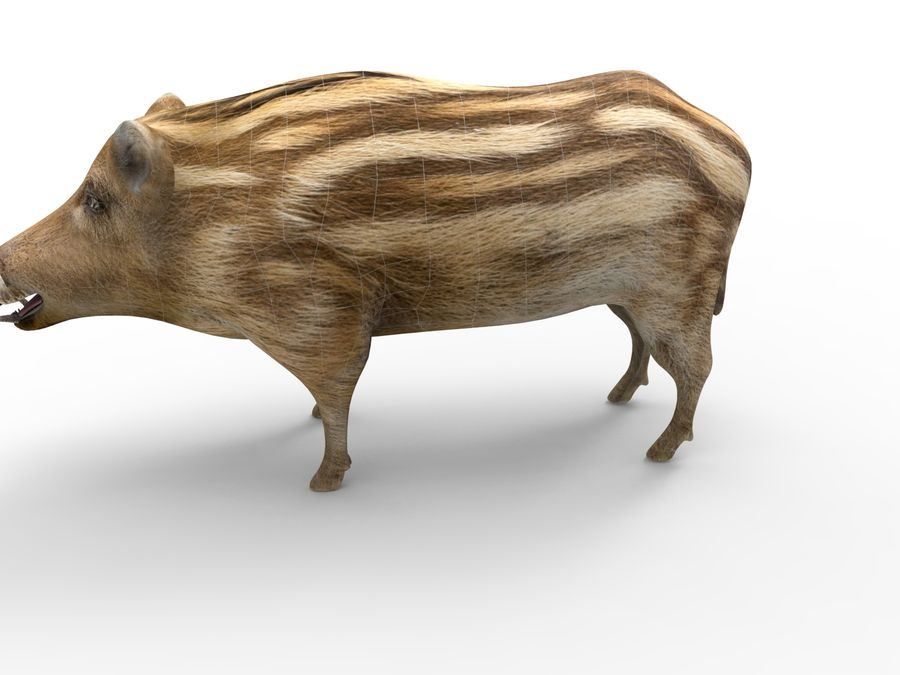 Cinghiale royalty-free 3d model - Preview no. 14