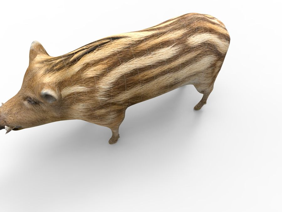 Cinghiale royalty-free 3d model - Preview no. 16