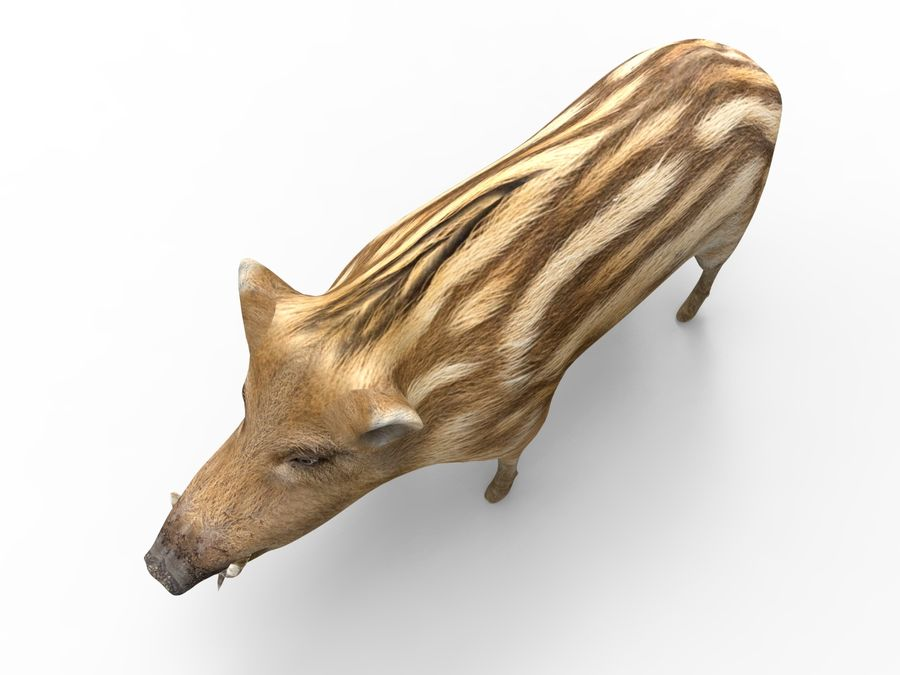 Cinghiale royalty-free 3d model - Preview no. 17