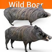 野猪 3d model