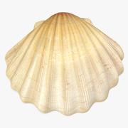 Sea Shell 2 modelo 3d