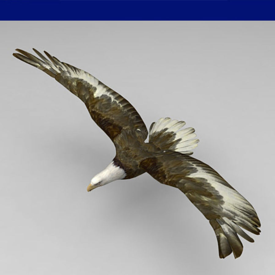 Adler royalty-free 3d model - Preview no. 3