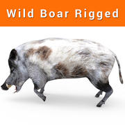 Wild Boar hair rigged 3d model