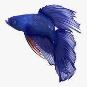 Blue Betta Fish Rigged 3d model
