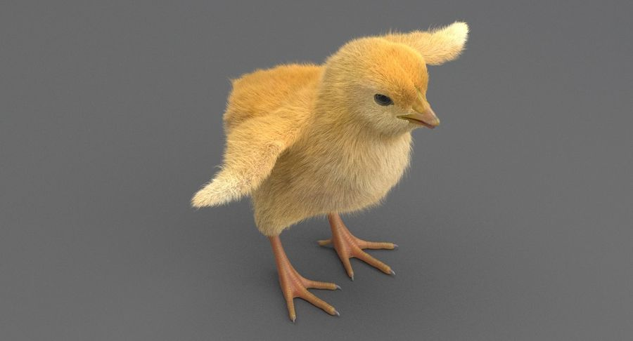 Chick royalty-free 3d model - Preview no. 7